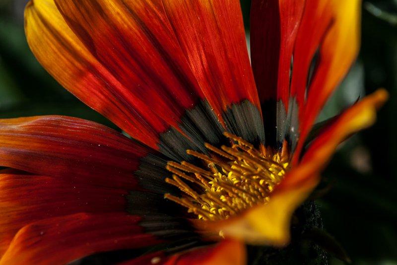 Fall in love   framed art eric christopher jackson treniq 3 1539357203113