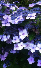Lilac-Contours-Iii_Mean-Magenta-Photos_Treniq_0