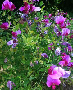 At-The-Cottage-Garden_Mean-Magenta-Photos_Treniq_0
