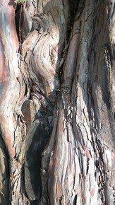 Nature-Abstract-Patterns_Paola-De-Giovanni_Treniq_0