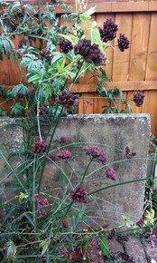 Front-Garden-Patterns_Paola-De-Giovanni_Treniq_0