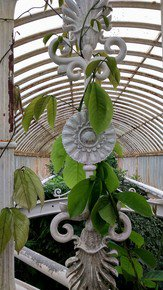 Kew-Gardens'-Patterns-Iii_Paola-De-Giovanni_Treniq_0