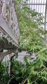 Rambling-Foliage-With-Victorian-Balcony_Paola-De-Giovanni_Treniq_0