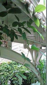Victorian-Details-With-Rambling-Foliage_Paola-De-Giovanni_Treniq_0