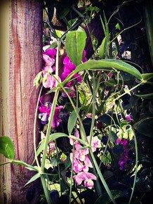 Rambling-Blooms-Iii_Paola-De-Giovanni_Treniq_0