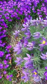 A-Curve-In-The-Violet-Garden_Paola-De-Giovanni_Treniq_0