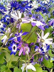 At-The-Local-Florist-Iv_Paola-De-Giovanni_Treniq_0