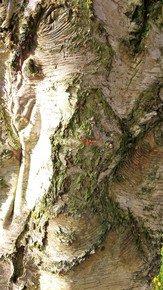 Woodlands-Patterns-Iv_Paola-De-Giovanni_Treniq_0