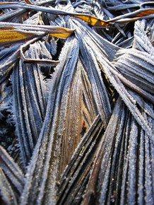 Frost-Fragments-I_Paola-De-Giovanni_Treniq_0