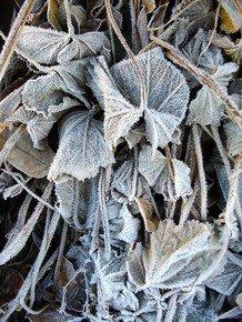 Intricate-Frost-Iii_Paola-De-Giovanni_Treniq_0