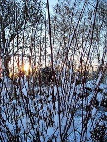 Winter-Dawn-Iii_Paola-De-Giovanni_Treniq_0