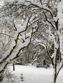Winter-Contours-Iv_Paola-De-Giovanni_Treniq_0