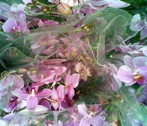 Wrapped-Bouquets-Iii_Paola-De-Giovanni_Treniq_0