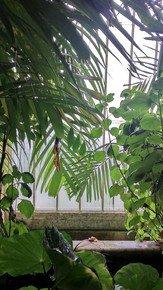 Kew-Patterns-Iii_Paola-De-Giovanni_Treniq_0