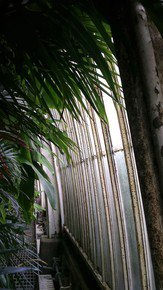 Kew-Patterns-_Paola-De-Giovanni_Treniq_0