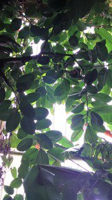Kew-Gardens'-Patterns-Iv_Paola-De-Giovanni_Treniq_0