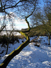 The-Wandering-Tree-Trunk_Paola-De-Giovanni_Treniq_0