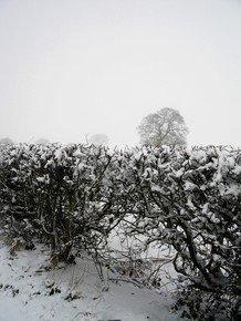 Towards-The-White-Fields_Paola-De-Giovanni_Treniq_0