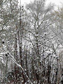 Winter-Patterns-Iv_Paola-De-Giovanni_Treniq_0