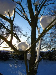 Candy-Floss-Snow-Iv_Paola-De-Giovanni_Treniq_0