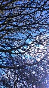 Intricate-Blue-Iv_Paola-De-Giovanni_Treniq_0