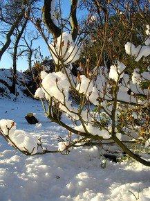 Candy-Floss-Snow-I_Paola-De-Giovanni_Treniq_0