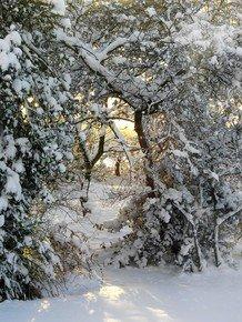 Winter-Perspective-Iii_Paola-De-Giovanni_Treniq_0