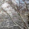 Candy floss snow paola de giovanni treniq 2 1547829543787
