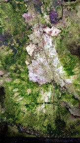 Nature's-Abstraction-With-Moss-Iii_Paola-De-Giovanni_Treniq_0