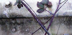 Guard-Rail-With-Rambling-Foliage_Paola-De-Giovanni_Treniq_0