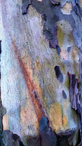 Bark-Abstraction-Iii_Paola-De-Giovanni_Treniq_0