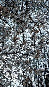 Intricate-White-Blooms_Paola-De-Giovanni_Treniq_0