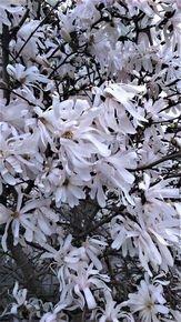 Swaying-Petals-Iii_Paola-De-Giovanni_Treniq_0
