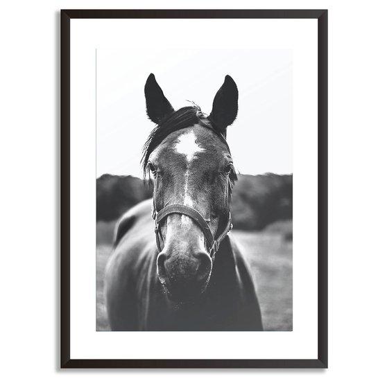 Posing horse   wall art print abstract house treniq 1 1554902923244
