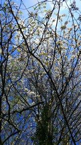 Spring-Blooms-Iii_Paola-De-Giovanni_Treniq_0
