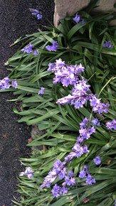 Garden-Edge-Iii_Paola-De-Giovanni_Treniq_0