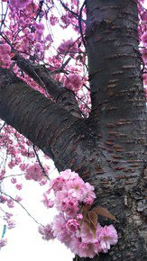 Spring-Pinks-Iv_Paola-De-Giovanni_Treniq_0
