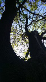 Under-The-Green-Canopy-Iv_Paola-De-Giovanni_Treniq_0
