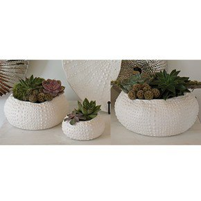Ceramic Urchin Bowl-Matte White-Lg