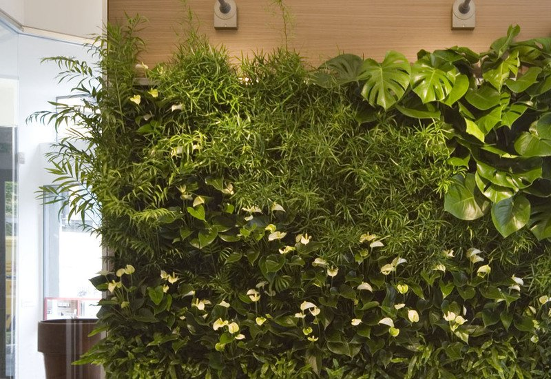 Indoor vertical gardens for offices panel iii sundar italia treniq 3