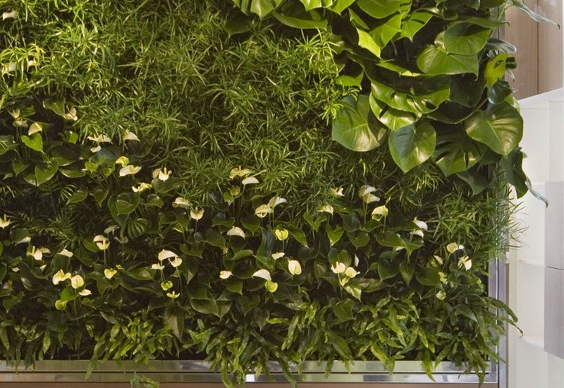 Indoor vertical gardens for offices panel iii sundar italia treniq 4