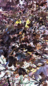 In-The-Woods-At-8-A.M._Paola-De-Giovanni_Treniq_0