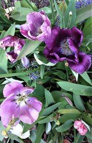 Violet-Hues-With-Pistils_Paola-De-Giovanni_Treniq_0
