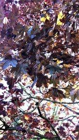 Bronze-Layers-Iv_Paola-De-Giovanni_Treniq_0