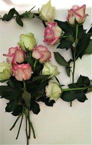 Acid-Green-And-Pink-Unfolding-Beauty_Paola-De-Giovanni_Treniq_0