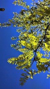 Acid-Green-Layers-Iv_Paola-De-Giovanni_Treniq_0