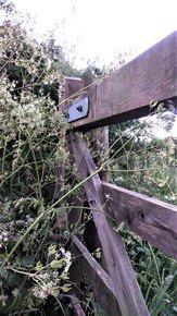 English-Countryside-Patterns_Paola-De-Giovanni_Treniq_0