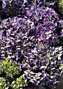 Violet-Hues-With-Pistils-Iv_Paola-De-Giovanni_Treniq_0