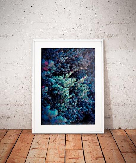 Spring   limited edition fine art print 1 of 10 tal paz fridman treniq 3 1580221858789