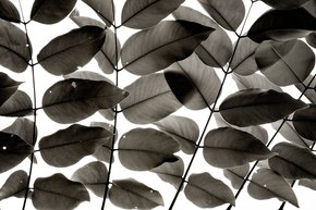 Branches-And-Leaves-I-|-Limited-Edition-Fine-Art-Print-1-Of-10_Tal-Paz-Fridman_Treniq_0